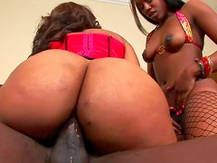 Two ebonies are fucking in a hot threesome