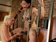 Brunette gets ball gagged and some electrodes make her stun