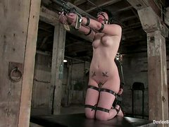 Horny chicks with hooks in their asses get tied up and toyed
