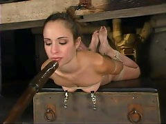 Sexy honey gets slapped and hogtied
