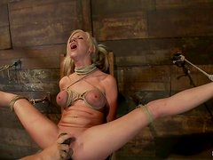 Getting her muff vibrated in bondage is something special for Kaylee Hilton