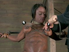 Being in slave hood Ashley Starr is treated in tough BDSM way